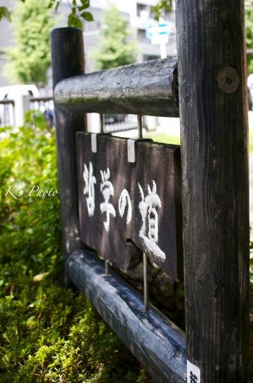 '12秋京都37.jpg