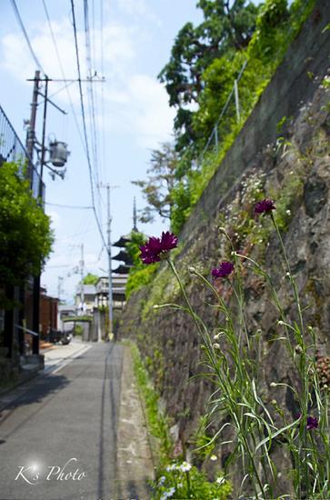 八坂の塔と花.jpg