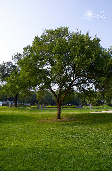 公園4.jpg