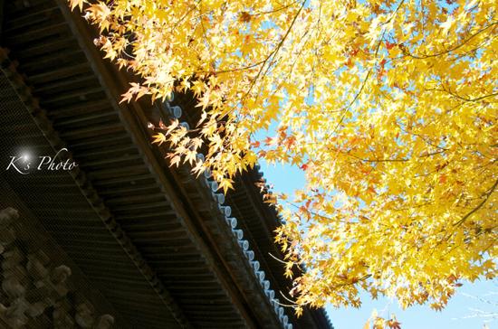 南禅寺紅葉2012.jpg