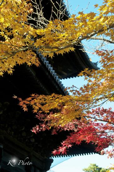 南禅寺紅葉20122.jpg