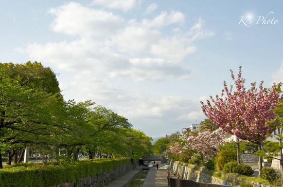 堀川通り5.jpg