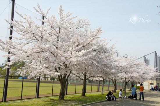 岡崎公園.jpg