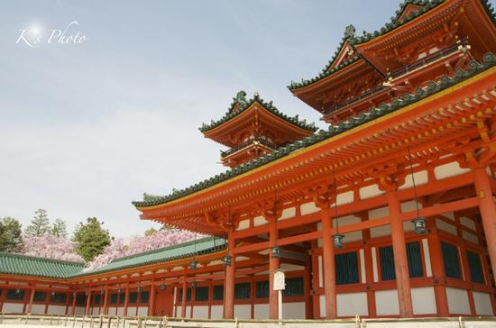 平安神宮の桜.jpg