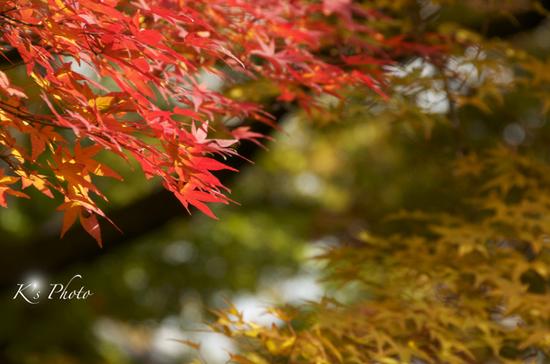 散り紅葉4.jpg
