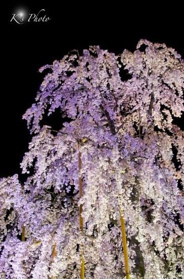 東寺夜桜10.jpg