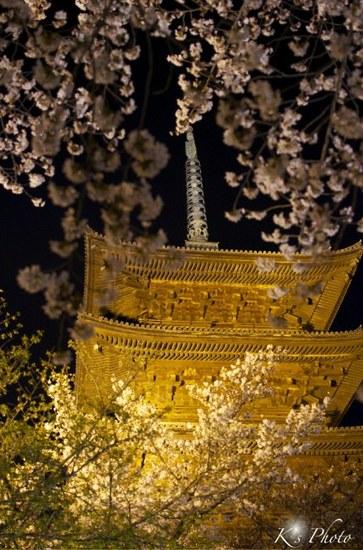東寺夜桜11.jpg