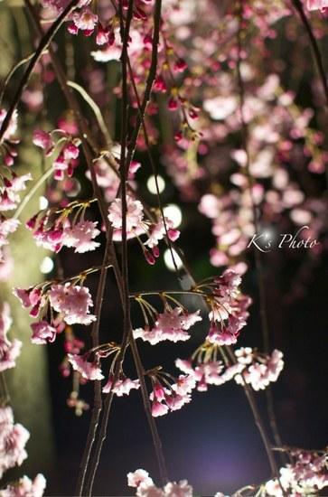 東寺夜桜2.jpg