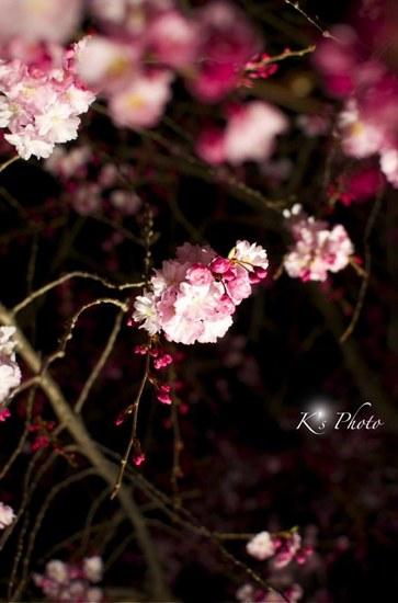 東寺夜桜3.jpg