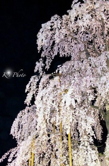 東寺夜桜6.jpg