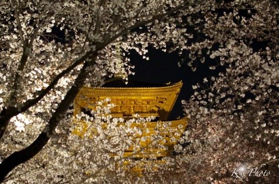 東寺夜桜9.jpg