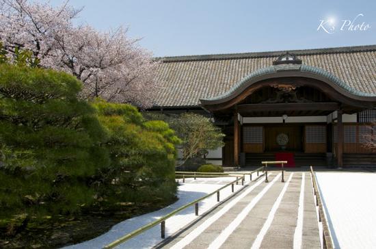 東寺桜5.jpg