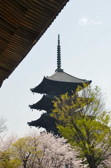 東寺桜6.jpg