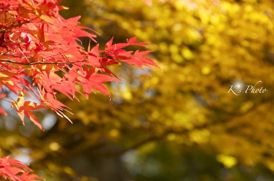 東福寺13.jpg