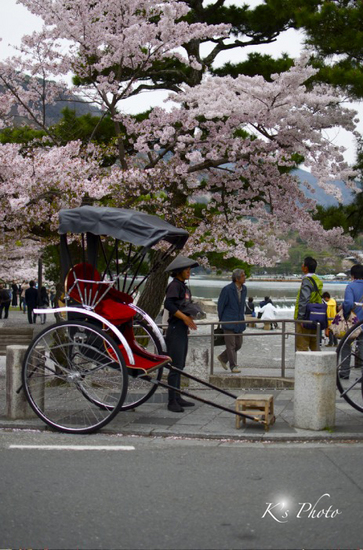 桜と人力車.jpg