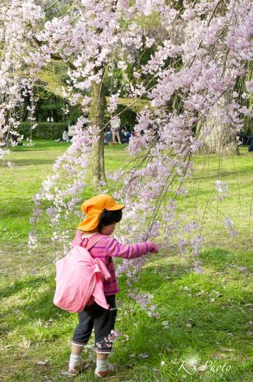 桜と女の子.jpg