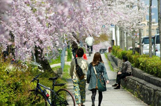 桜ふたり.jpg