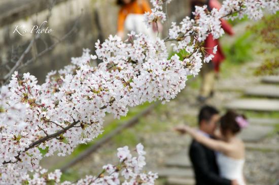 桜ふたり3.jpg