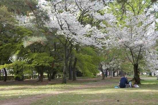 桜ふたり6.jpg