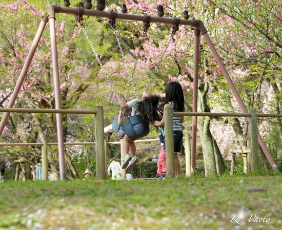 桜ぶらんこ.jpg