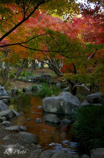 梅小路公園3のコピー.jpg
