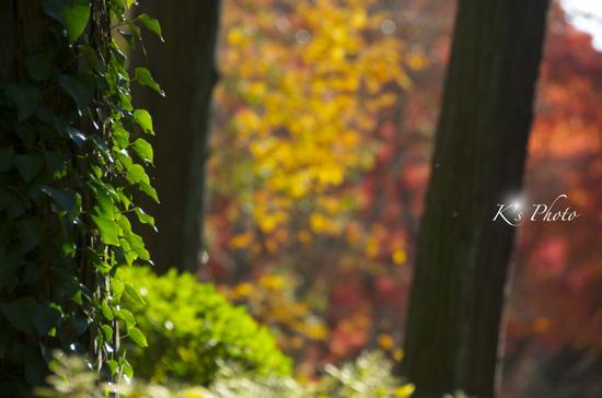 植物園1のコピー.jpg