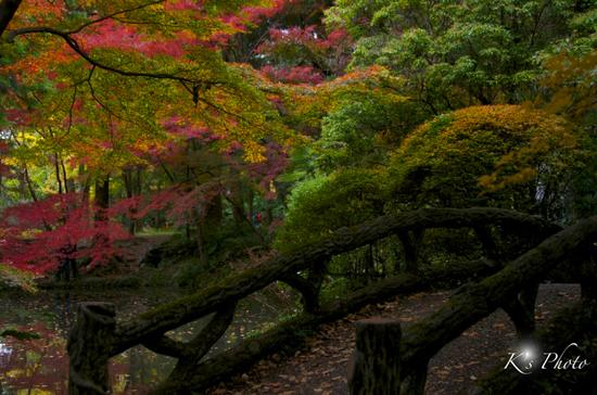 植物園2のコピー.jpg