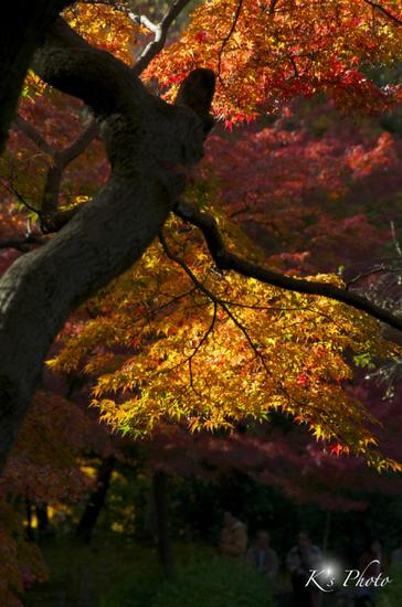 植物園4のコピー.jpg