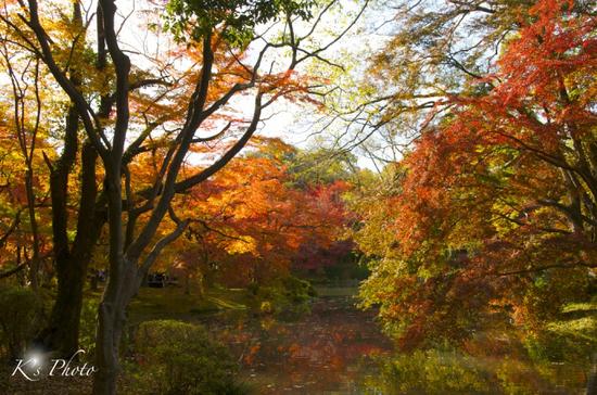 植物園5のコピー.jpg