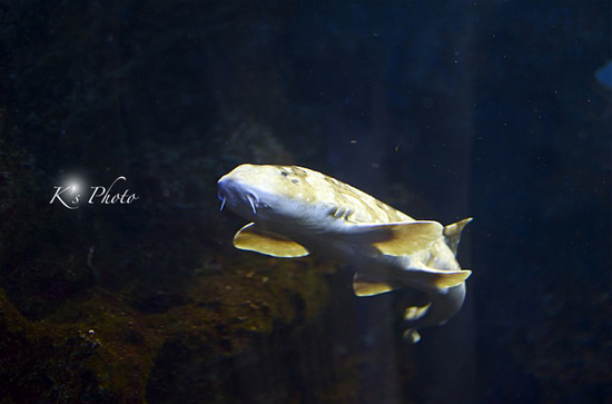 水族館5.jpg
