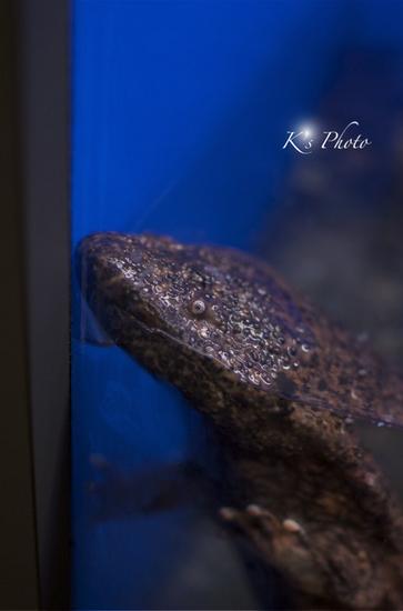 水族館8.jpg