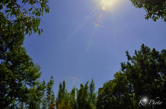 空と樹.jpg