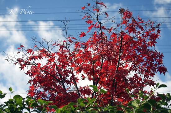 窓から紅葉.jpg
