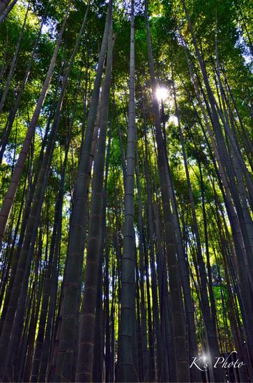 竹林のこみち.jpg