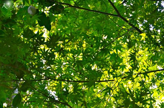 緑の天井.jpg