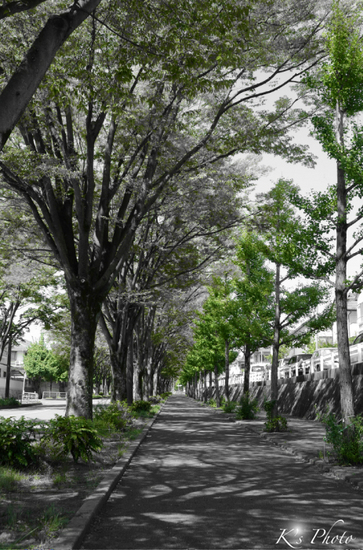 緑の歩道.jpg