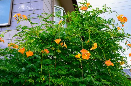 花のある家.jpg