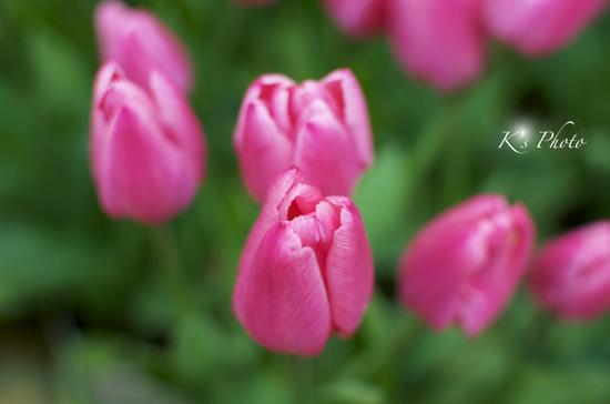 花弁2.jpg