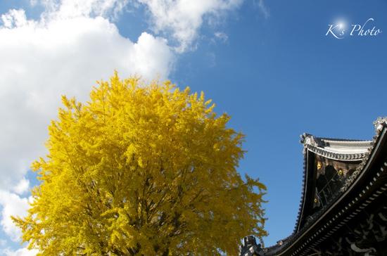 西本願寺1のコピー.jpg