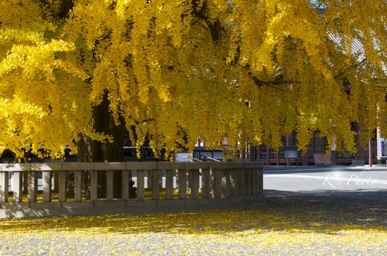 西本願寺2のコピー.jpg