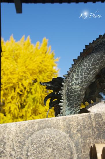 西本願寺3のコピー.jpg