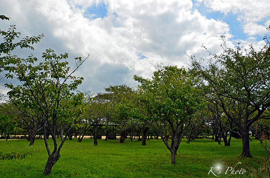 豊公園.jpg