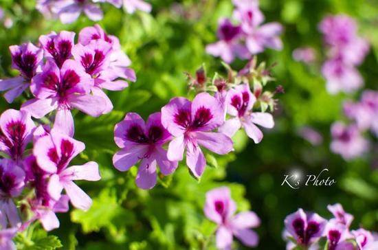 赤紫の花.jpg