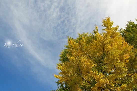 銀杏と空.jpg