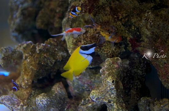 魚2.jpg
