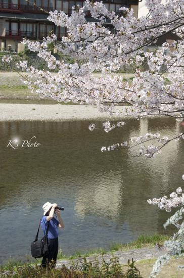 鴨川の桜を撮る.jpg
