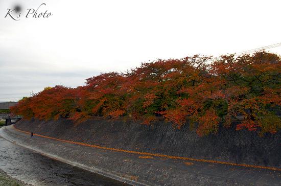 鴨川紅葉2.jpg